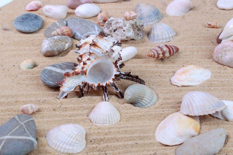 Verschiedene Muscheln im Sand lizenzfreie stockbilder