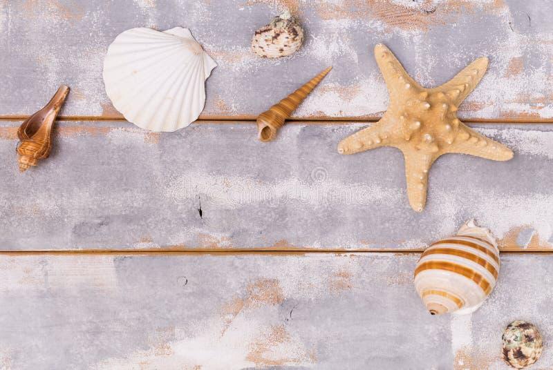 Verschiedene Muscheln und Starfish auf einem hölzernen Hintergrundreise- und -ferienhintergrund Kopieren Sie spase lizenzfreies stockbild