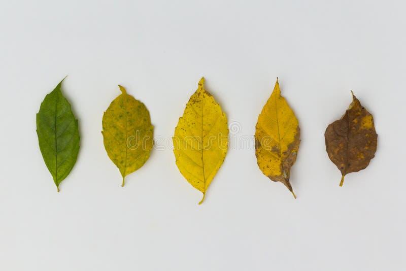 Verschiedene Stadien der lebens- Geburt zum Tod Konzept des Alterns, verschiedene Stadien der lebens- Geburt zum Tod Konzept des  stockfoto