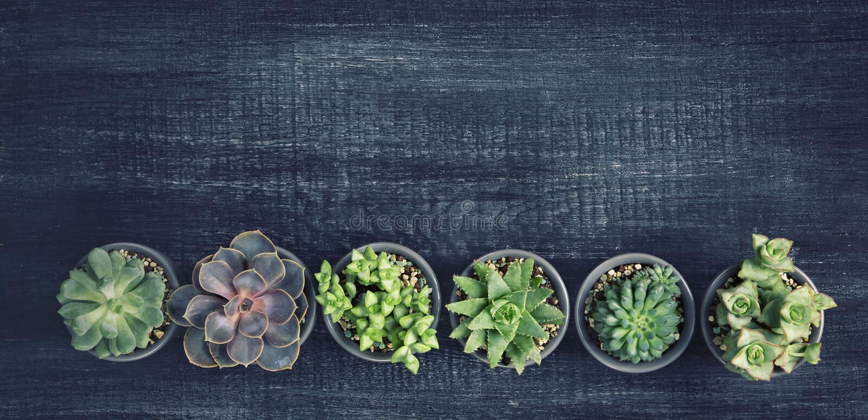 Verschiedene Succulents lizenzfreie stockbilder