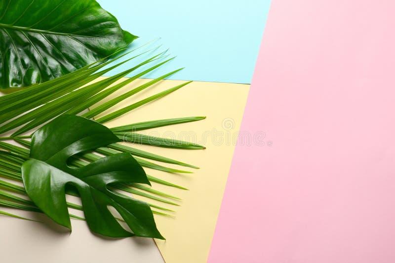 Verschiedene tropische Blätter auf Farbhintergrund stockfoto