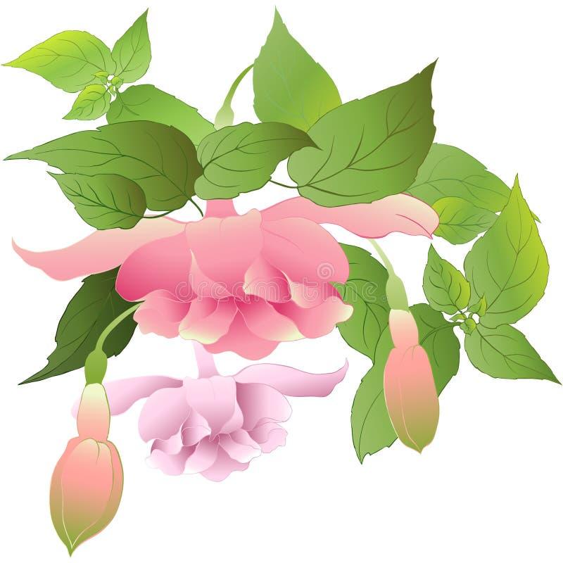 Verschiedene Varianten der Farbe sind möglich fuchsia Dekorative Zusammensetzung von Blumen, von Knospen und von Blättern tapete stock abbildung