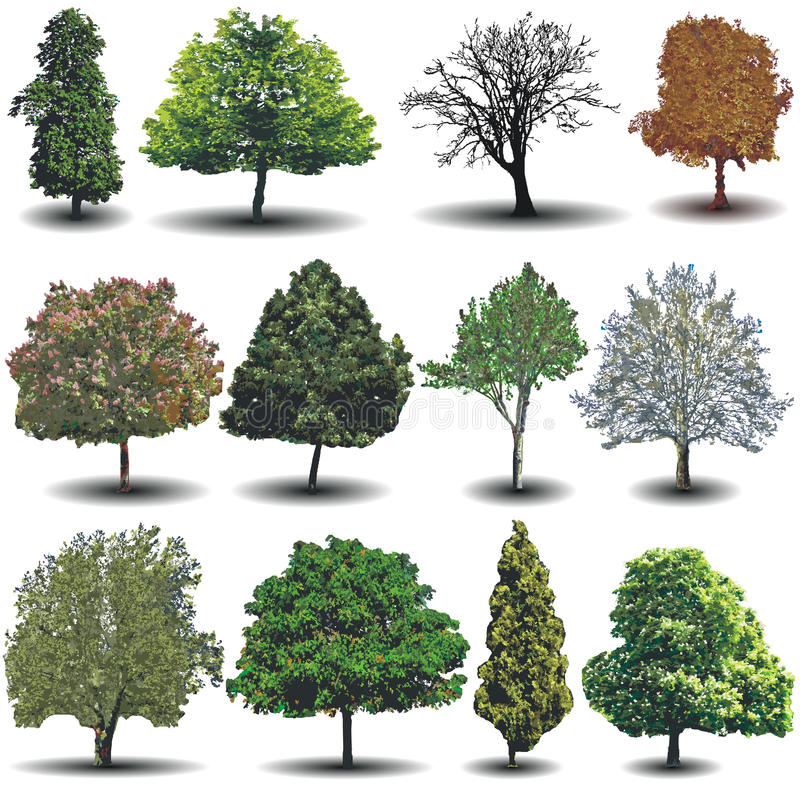 Verschiedene Vektorbäume vektor abbildung
