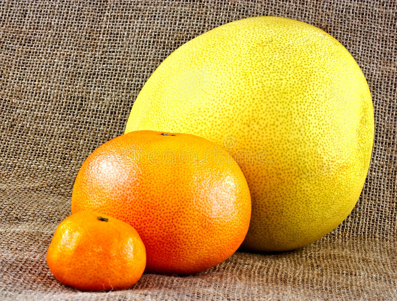 Verschiedene Zitrusfrucht Stockbilder