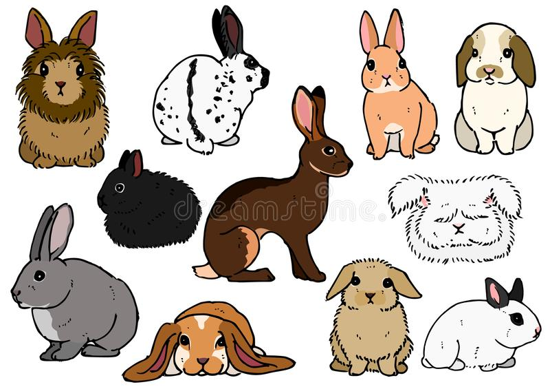 Verschiedene Zucht von Kaninchen vektor abbildung