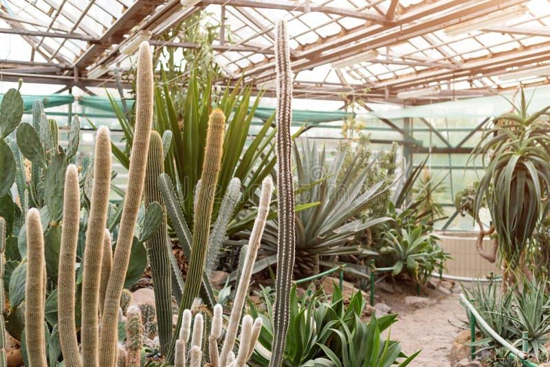 Verschiedener Kaktus in einem erhaltenden Glashaus Succulents im Wüstengewächshaus gepflanzt in einem botanischen Garten stockbilder