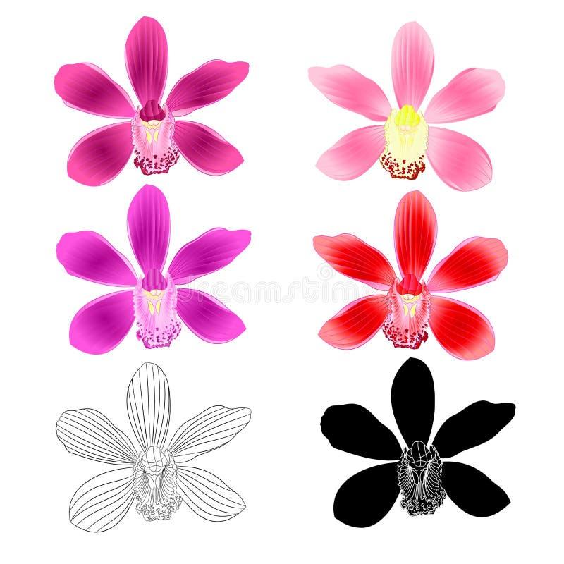 Verschiedenes lila Rosa Blumen tropisches Orchideen Cymbidium purpurrotes rote Blume realistisch und Entwurf und Schattenbild auf stock abbildung