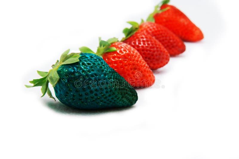 Verschillend dan de rust alleen blauwe aardbei Concept voor genetisch gewijzigd voedsel stock afbeelding