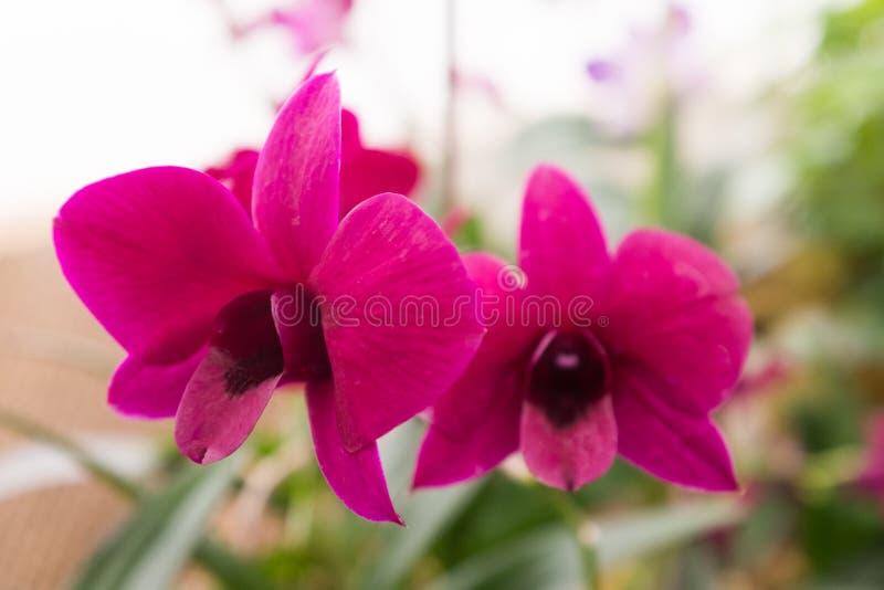 Verschillend soort van orchideeën in een tropisch tuinparadijs stock afbeeldingen