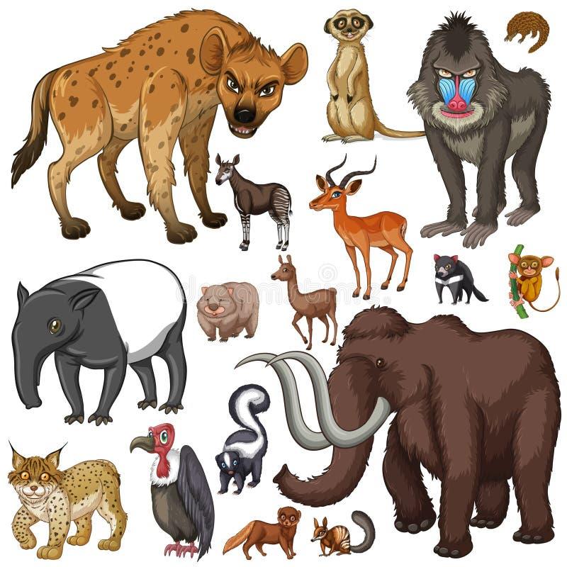 Verschillend soort wilde dieren stock illustratie