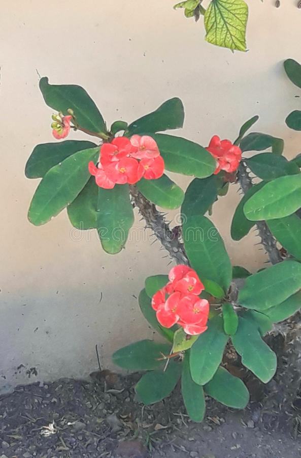 Verschillende bloem royalty-vrije stock afbeelding