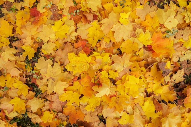 Verschillende de herfstbladeren royalty-vrije stock foto