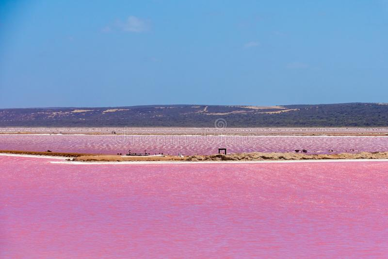 Verschillende delen van het Roze Meer naast Gregory in Westelijk Australi? royalty-vrije stock foto