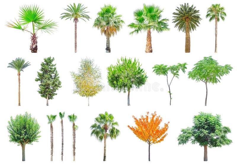 Verschillende die bomen op wit worden geïsoleerd stock afbeeldingen