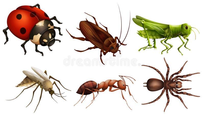 Verschillende insecten stock illustratie