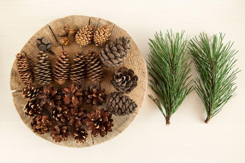 Verschillende kegels van naaldboom en twee takken van pijnboom op de witte achtergrond, hoogste mening stock foto