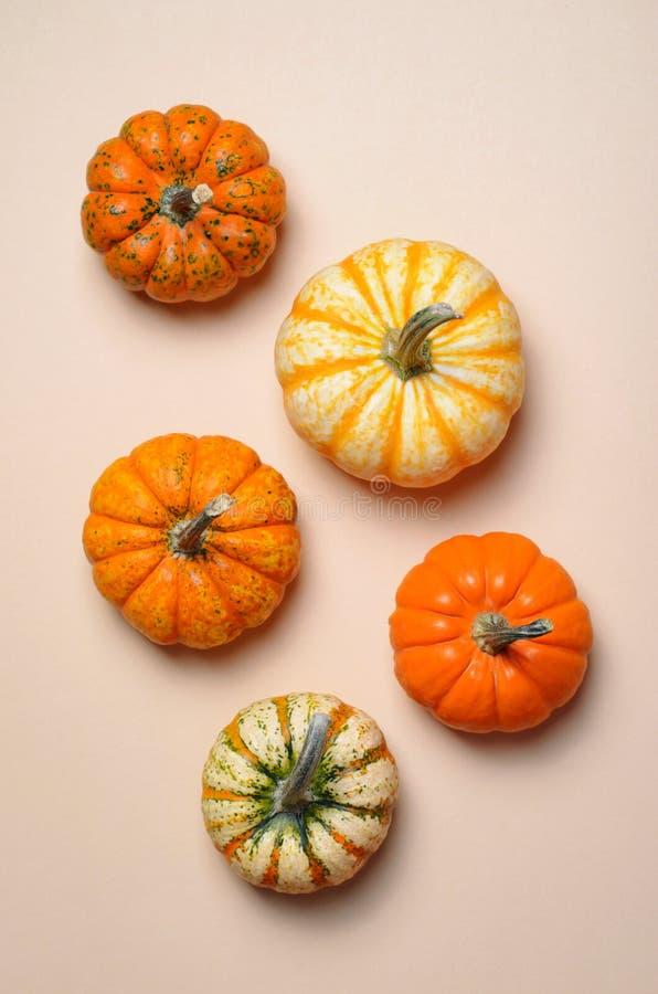 Verschillende Kleurrijke Pompoenen, Autumn Thanksgiving en Halloween-Achtergrond stock afbeelding