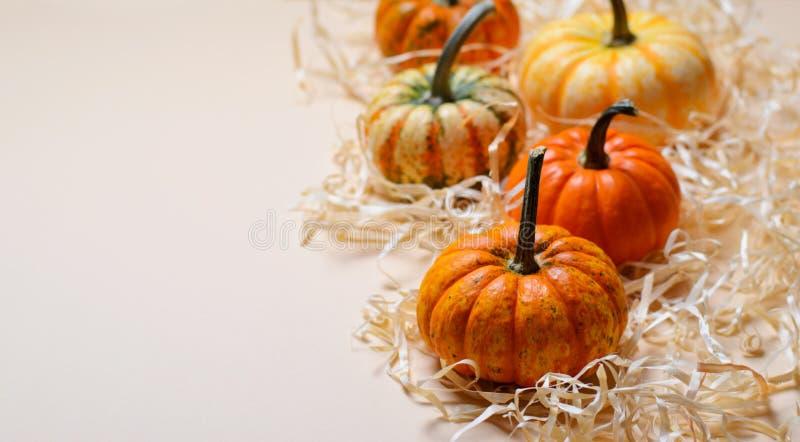 Verschillende Kleurrijke Pompoenen, Autumn Thanksgiving en Halloween-Achtergrond stock foto