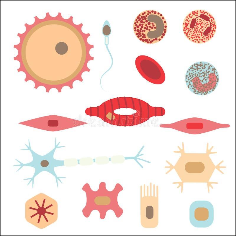 Verschillende menselijke celtypes stock illustratie