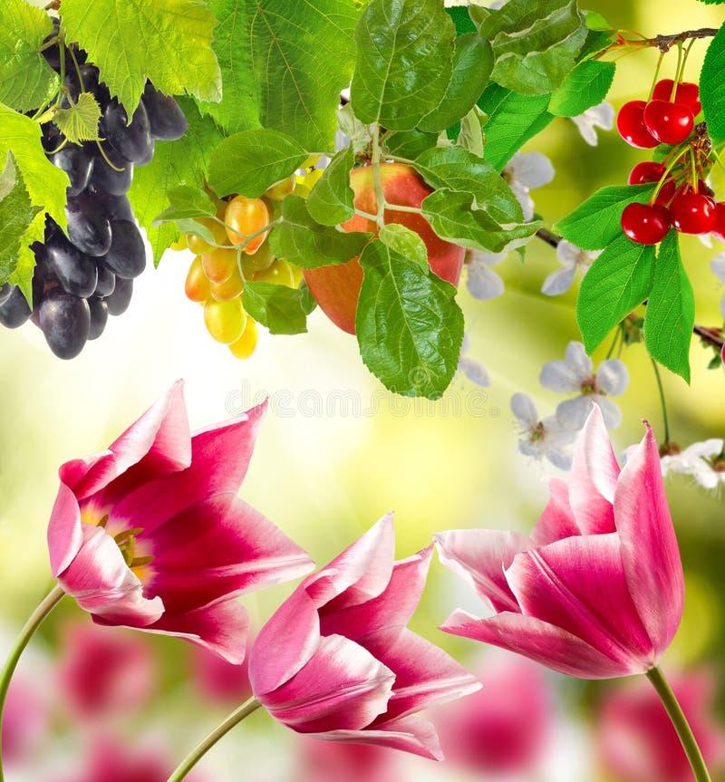 Verschillende mooie bloemen in de tuin royalty-vrije stock afbeelding