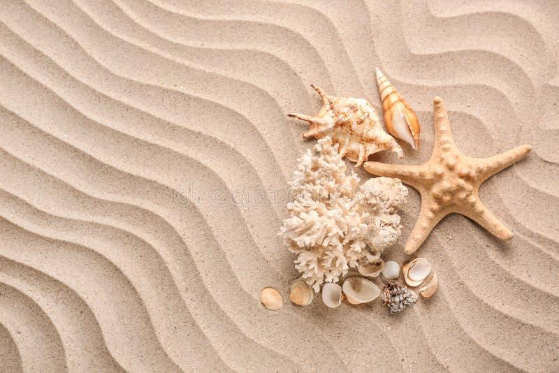 Verschillende overzeese shells en zeester op zand stock afbeelding
