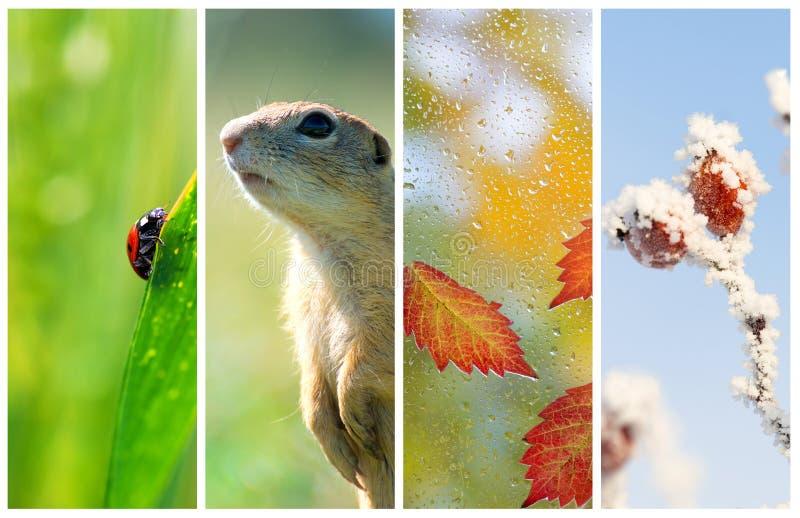 Verschillende seizoenen van het jaar Het concept van de het levenscyclus stock afbeeldingen