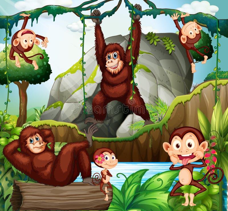 Verschillende soorten apen in bos vector illustratie