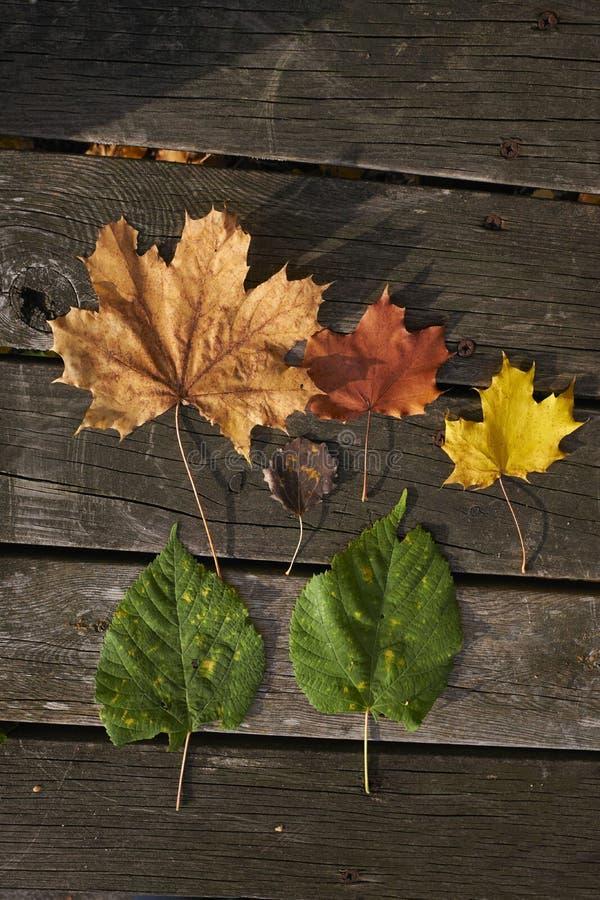 Verschillende soorten blad Rood, geel en groen stock afbeelding