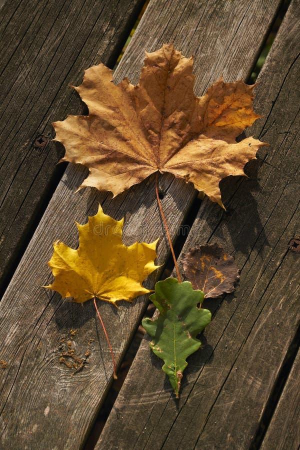 Verschillende soorten bladeren Rood, geel en groen royalty-vrije stock afbeelding
