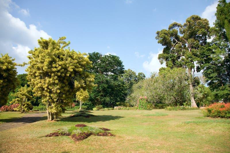 Verschillende soorten bomen in Koninklijke Botanische Tuinen, Peradeniya royalty-vrije stock fotografie