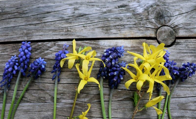 Verschillende soorten kleurrijke bloemen in lijn op rustieke houten achtergrond Hoogste mening en grensontwerp, bloem van de lent stock foto