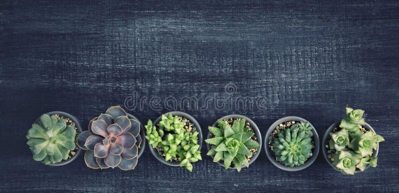 Verschillende succulents royalty-vrije stock afbeeldingen