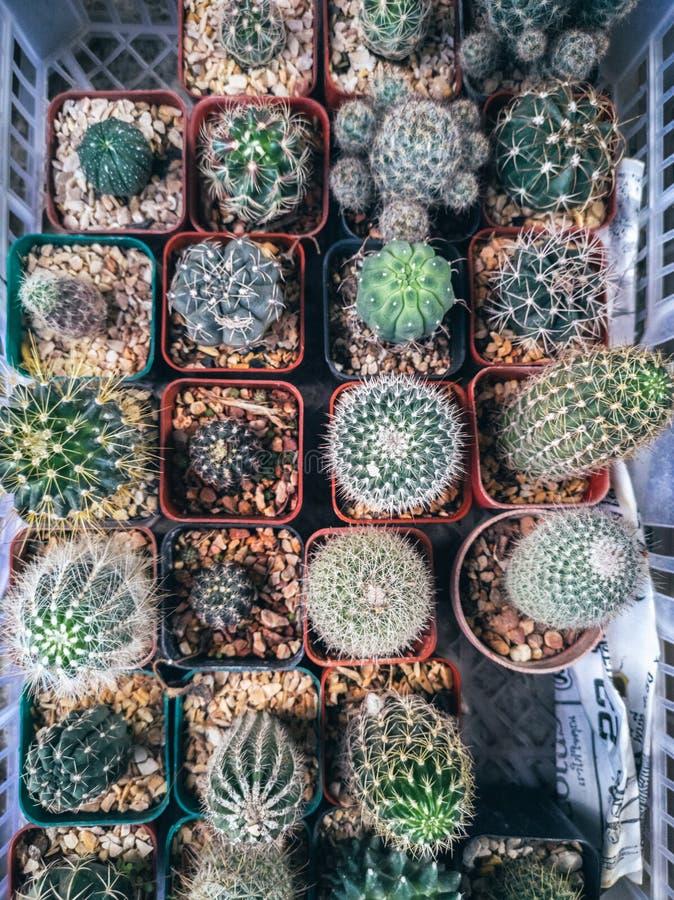 Verschillende succulents en cactus in potten en mand royalty-vrije stock afbeeldingen