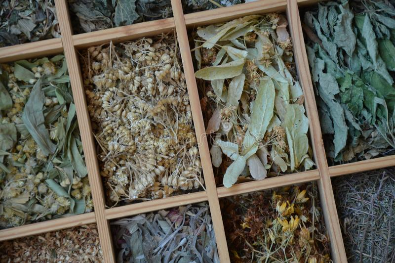 Verschillende theebladen in kleine vakjes van hierboven stock afbeelding