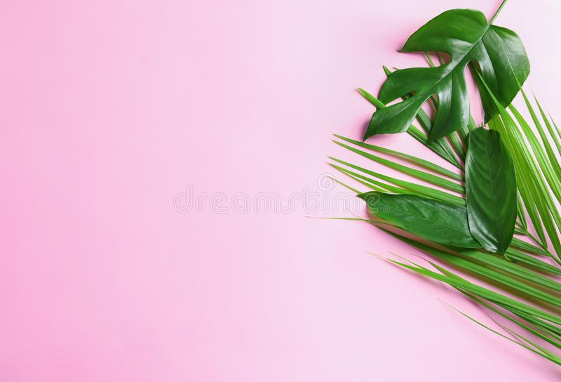 Verschillende tropische bladeren op kleurenachtergrond stock afbeeldingen
