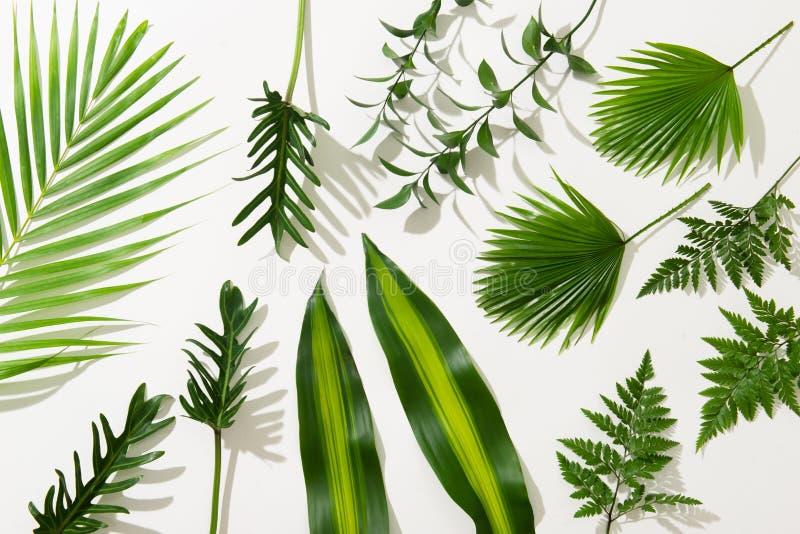 Verschillende tropische bladeren op witte achtergrond stock foto
