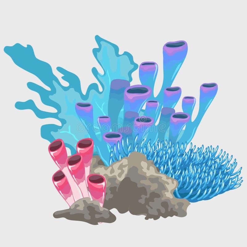 Verschillende types van blauw en rood koraal vector illustratie