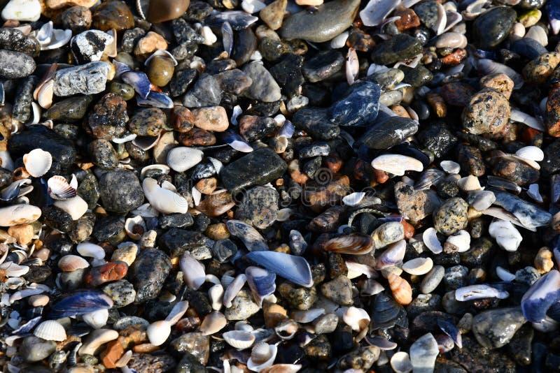 Verschillende zeeschelpen en kleine stenen met strandzand royalty-vrije stock fotografie