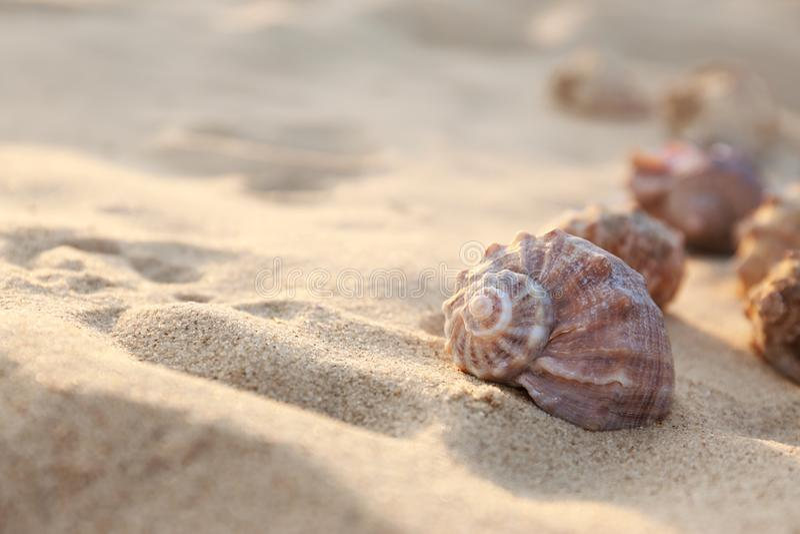 Verschillende zeeschelpen op zandig strand Ruimte voor stock afbeeldingen