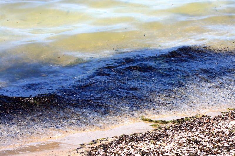 Verschmutztes Wasser und Strand