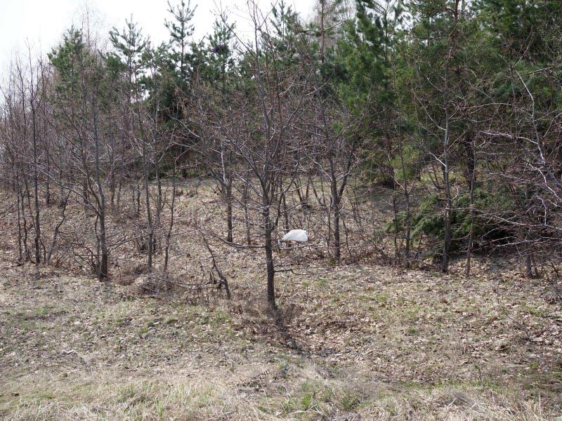 Verschmutzungsplastikpakete auf Niederlassungen Plastikabfall im Wald lizenzfreies stockfoto