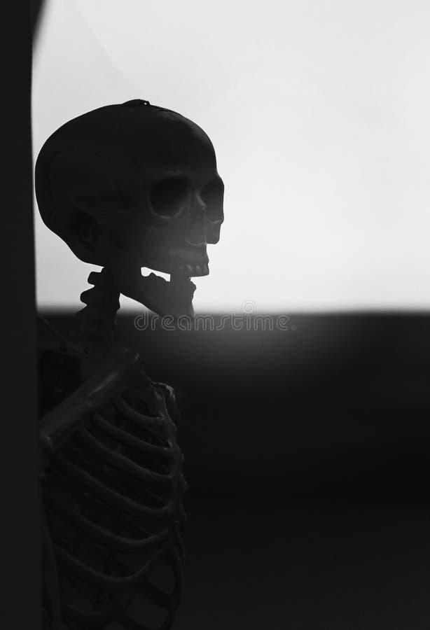 Verschrikking, wreedheid, doodsconcept: menselijk schedelsverlof op de muur w royalty-vrije stock foto