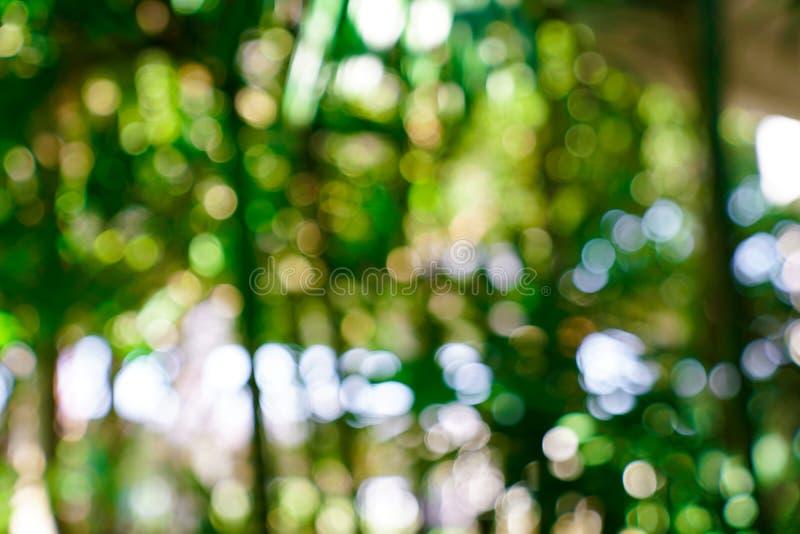 Verse aard groene onscherp en bokeh achtergrond stock afbeelding