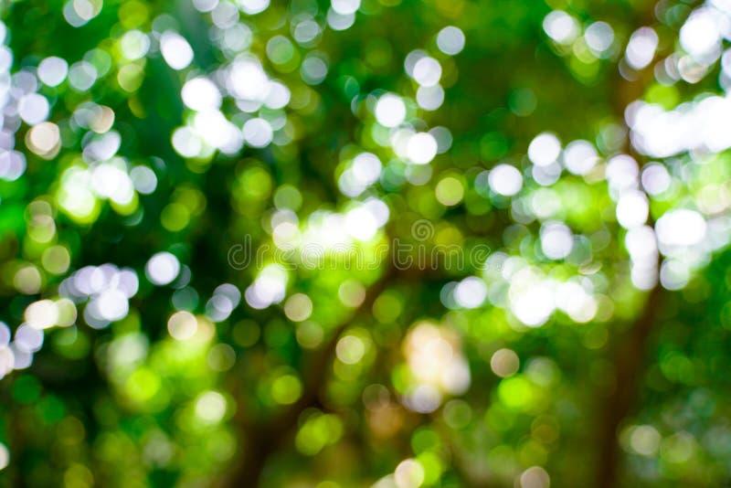 Verse aard groene onscherp en bokeh achtergrond stock fotografie