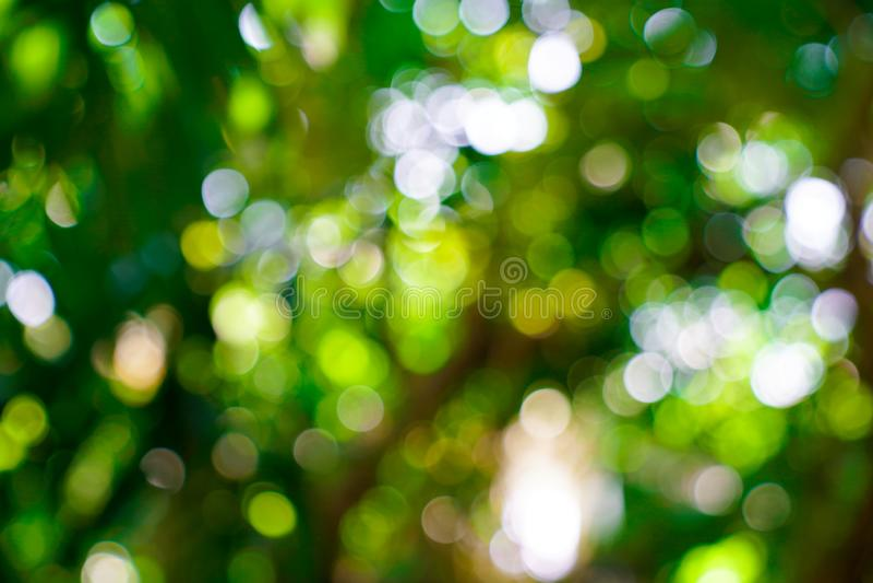 Verse aard groene onscherp en bokeh achtergrond stock afbeeldingen
