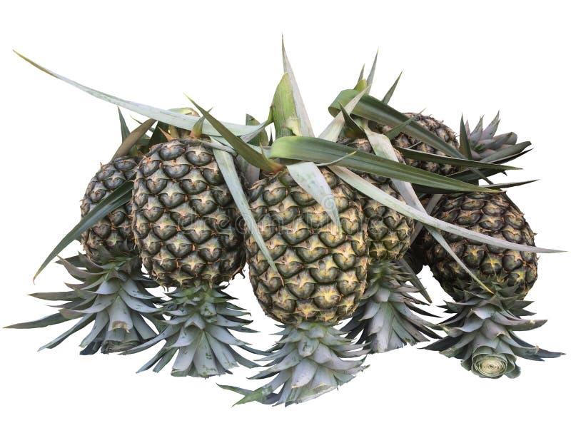 Verse ananas die op witte achtergrond wordt geïsoleerdm royalty-vrije stock afbeeldingen