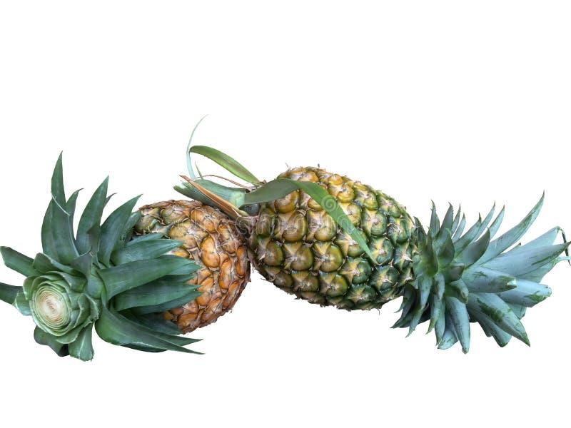 Verse ananas die op witte achtergrond wordt geïsoleerdm stock afbeeldingen