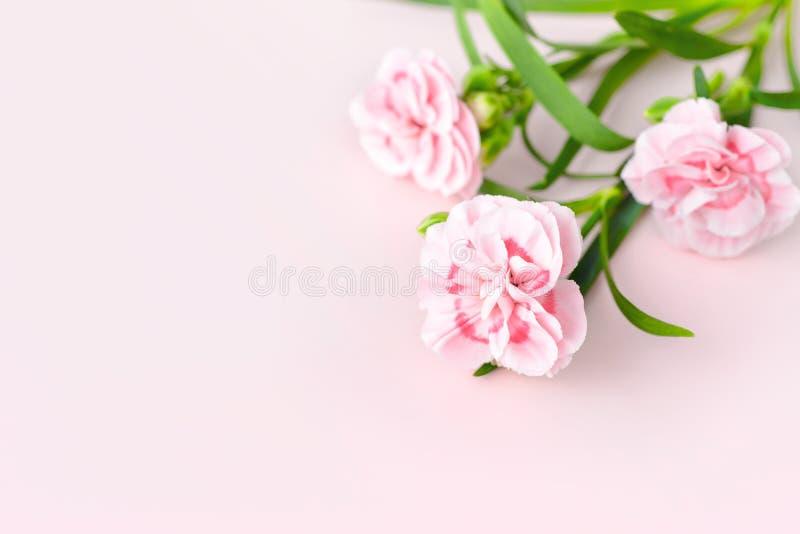 Verse anjers op roze papper, de banner van de moedersdag royalty-vrije stock foto's