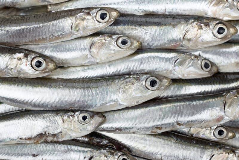 Verse ansjovissen voorbereide zeevruchtentextuur als achtergrond Ruw voedsel royalty-vrije stock foto