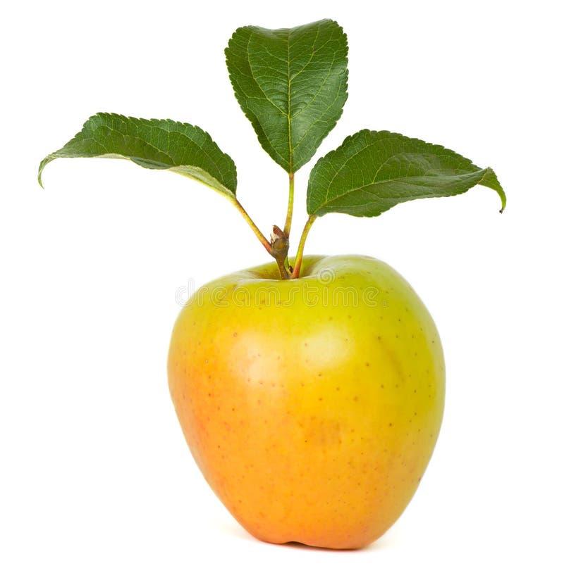 Verse appel royalty-vrije stock foto